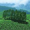 kerala-green-th