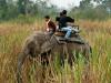 elephant-wildlife