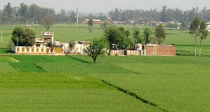 Punjab is a wheat basket and its rural landscape can be magically pretty