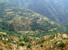 Seeing terraced fields in the hills can cause you to stop and admire even in narrow Himalayan roads. In Uttarakhand