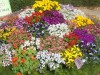 Bunches of spring flowers, here at the Garden of Five Senses, Delhi