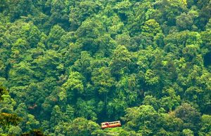 forest ecotourism wayanad