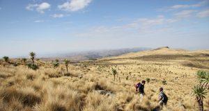 ethiopia fields