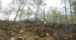 forest-fire-day-ranikhet