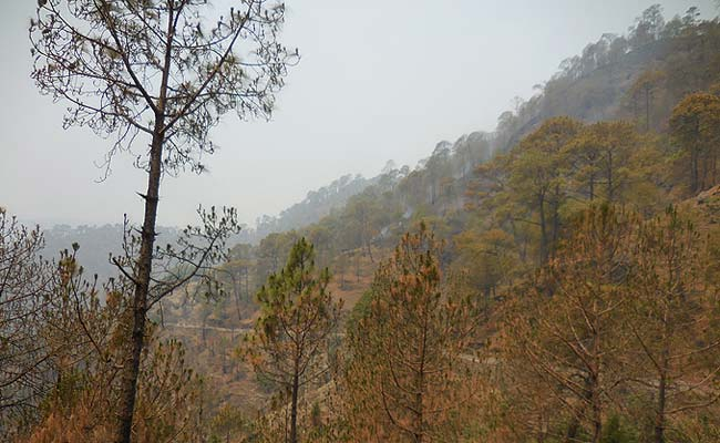 Painful to see such a parched hilside at ranikhet