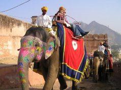 tourist-jaipur-elephant