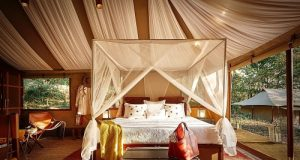 TUTC's luxurious camp in Kohima, Nagaland