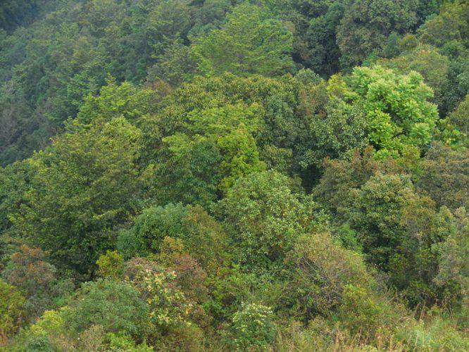 Dense canopies dot Silent Valley